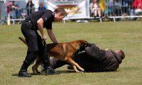 Собаки-охранники